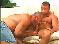 Hairy bear daddies screw hard