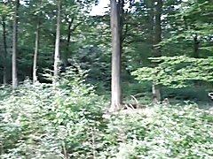 Unterwegs im Neukloster Forst